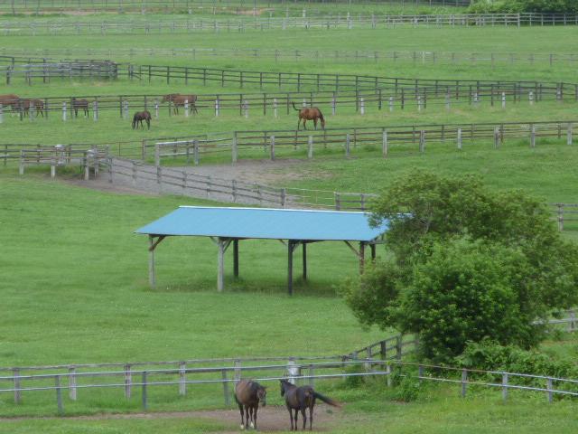 公園からの牧場2