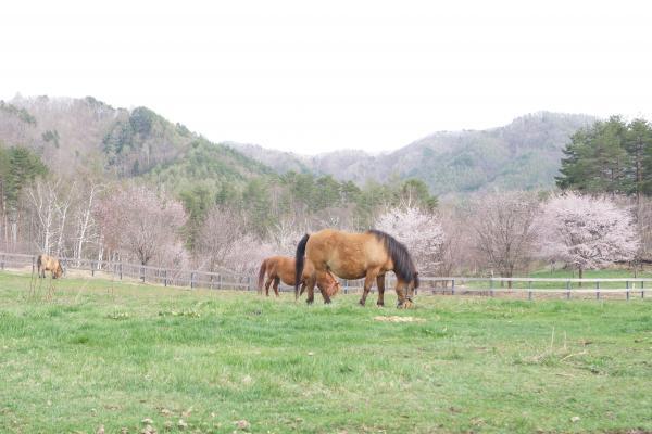 木曽馬の里