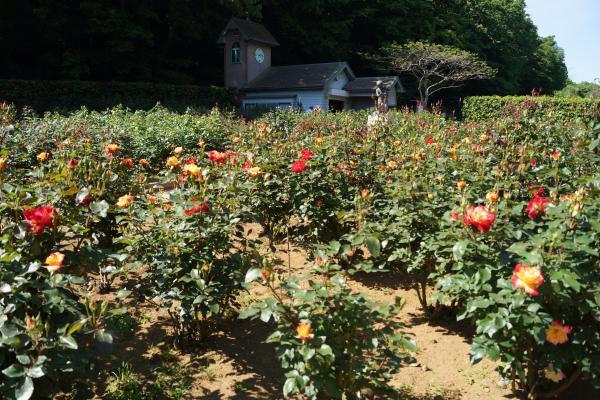 植物園+(4)_convert_20140511211153