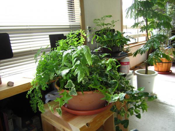 観葉植物+(6)_convert_20140525223755