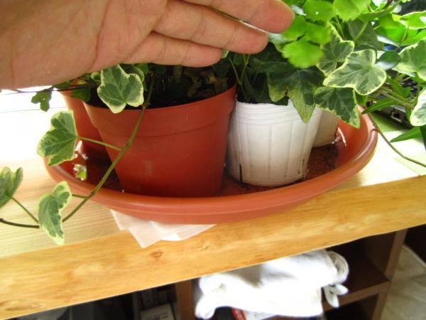 観葉植物+(3)_convert_20140525223643