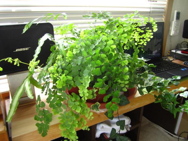 観葉植物+(2)_convert_20140525223609