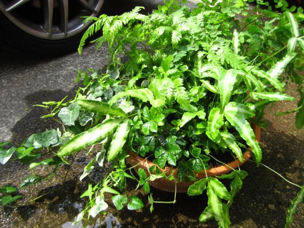 観葉植物+(5)_convert_20140525223935