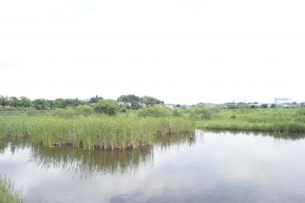 大柏川調節池 (2)