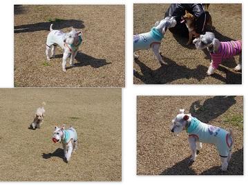 2014-03-16 憩いの広場3