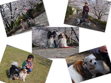 2014-03-27 中尾城公園桜2