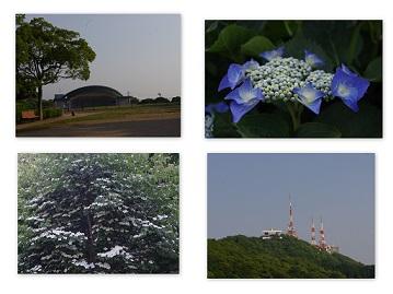 2014-05-31 稲佐山ドッグラン3