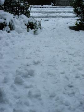 スロープの雪