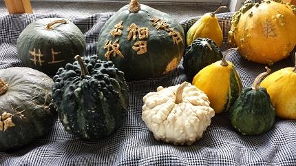 本牧かぼちゃ祭り用かぼちゃ