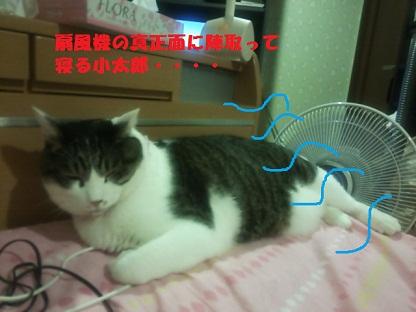 DSC_0460.jpg