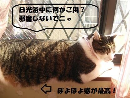 DSC_0462.jpg