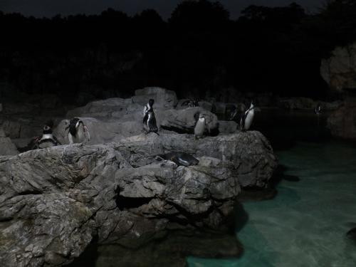 ペンギンDSCF1025