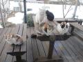 朝ごはんを待つ猫たち