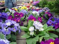 館内の花々