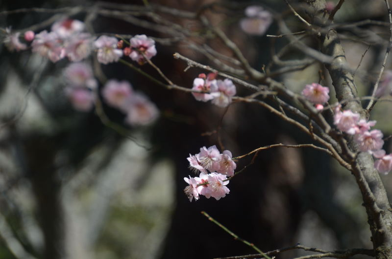 春到来_01