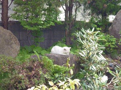 石の上に猫-s