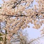 s-hirosakipark_p02-150x150.jpg