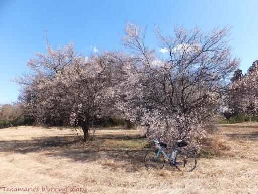 満開の梅にチョット寄り道