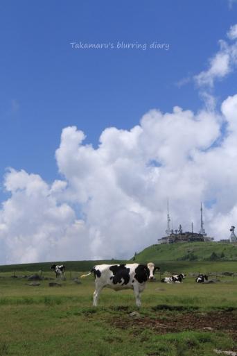 牛がこちらを向いた瞬間を撮りました