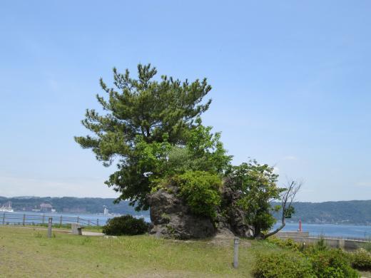 桜島の旅③