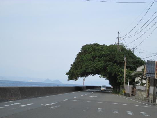 桜島の旅⑨