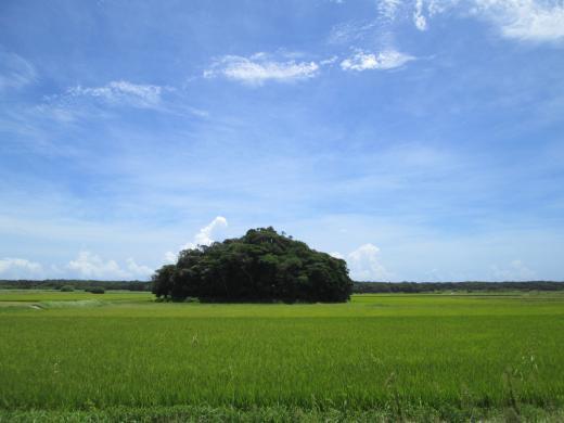 2014夏種子島⑦