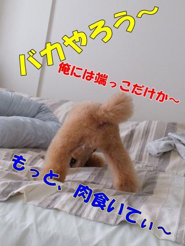 DSC_0692-1