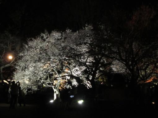 夜・梅・祭0001_2