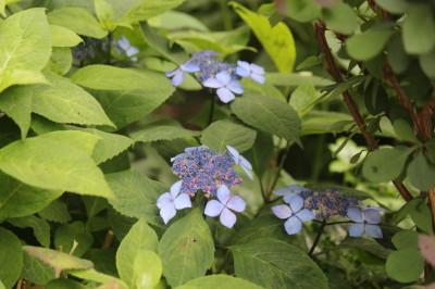 藍姫0001
