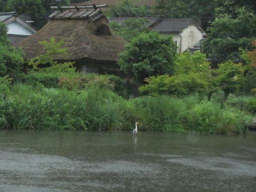 金鱗湖0001