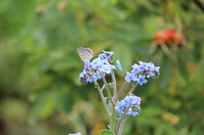 蝶々0001