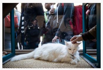 マンハッタン猫カフェ6