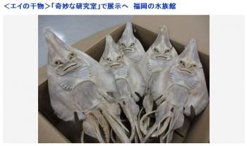 news<エイの干物>「奇妙な研究室」で展示へ 福岡の水族館