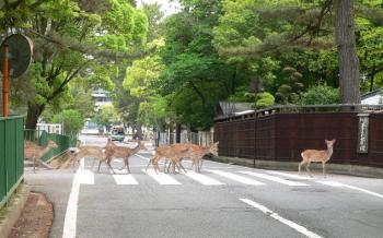 奈良公園へようこそ - 奈良県立都市公