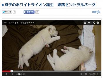 news双子のホワイトライオン誕生 姫路セントラルパーク