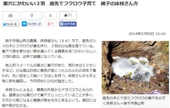 news巣穴にかわいい3羽 庭先でフクロウ子育て 銚子の床枝さん方