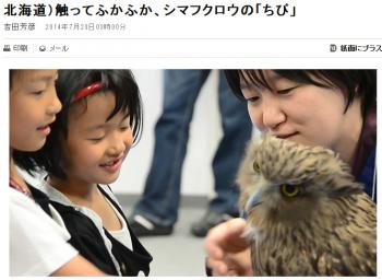 news北海道)触ってふかふか、シマフクロウの「ちび」