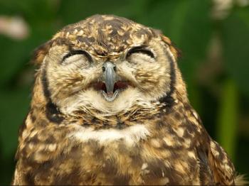 意外に表情豊かなフクロウの写真いろい