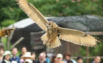 掛川花鳥園 フクロウ飛行ショー ー 季節の