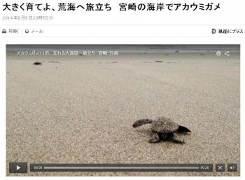 news大きく育てよ、荒海へ旅立ち 宮崎の海岸でアカウミガメ
