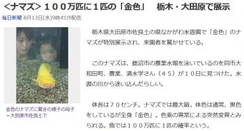 news<ナマズ>100万匹に1匹の「金色」 栃木・大田原で展示