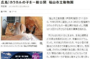 news広島)カラカルの子を一般公開 福山市立動物園