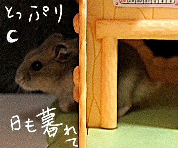 hamster2014612.jpg