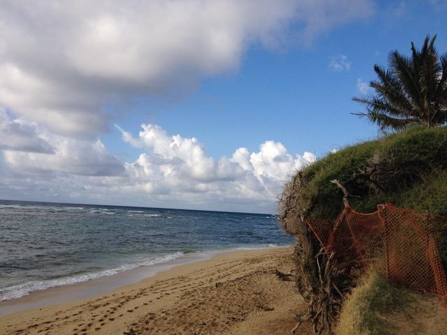 hawaii run2 (2)