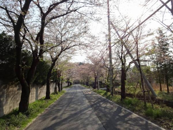 2014-04-13 栃木 065