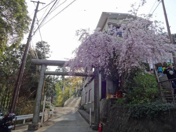 2014-04-13 栃木 067