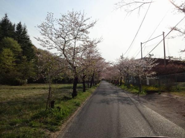 2014-04-13 栃木 066
