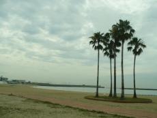 海岸を眺める