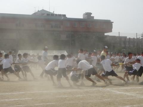 体育祭⑯石岡中 綱引き