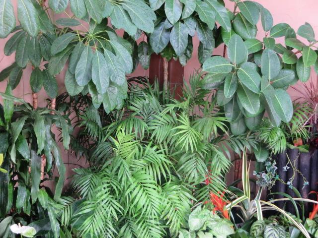 ジャングル風